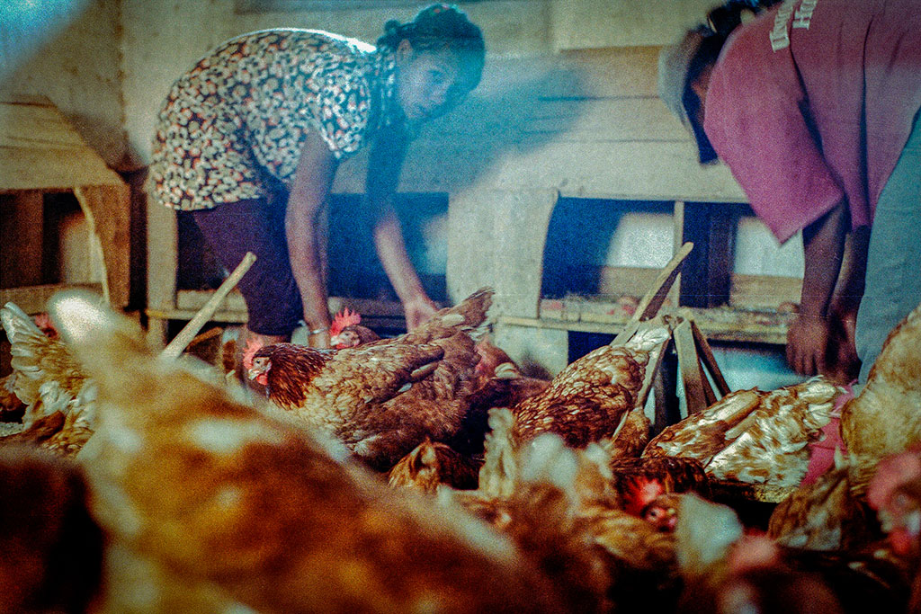 Elles suivent des stages où elles sont rémunérées, ici dans une ferme à quelques kilomètres de la capitale.